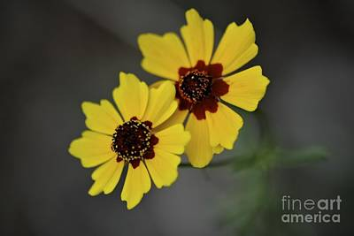 Photograph - Two Flowers by Sherry Davis