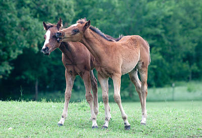 Photograph - Two Foals  by Jim  Arnold