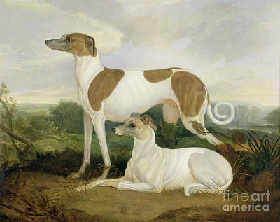 Two Greyhounds In A Landscape Art Print by Charles Hancock