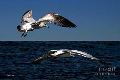 Digital Art - Two Gulls by Dale   Ford