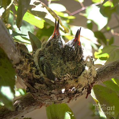 Photograph - Two Hummingbird Babies In A Nest 3 by Xueling Zou