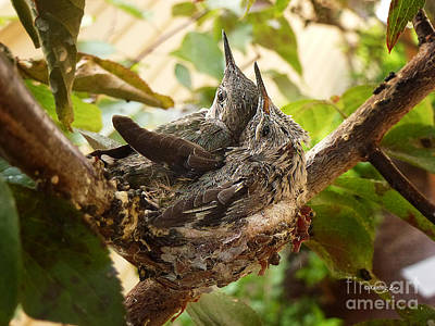 Photograph - Two Hummingbird Babies In A Nest 4 by Xueling Zou