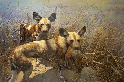 Two Hyenas In The Grass San Francisco Art Print