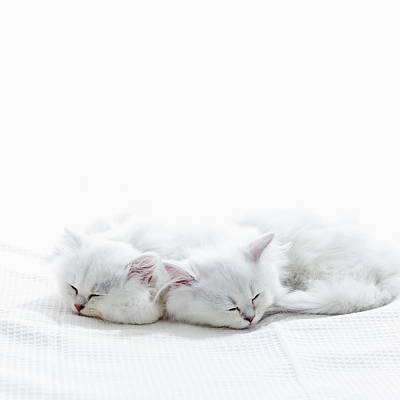 Longhair Cats Photograph - Two Kittens Sleep. by Ultra.f