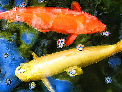 Photograph - Two Koi Cruising by Paul Cutright