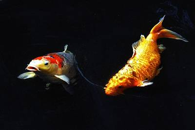 Butterfly Koi Photograph - Two Koi by Don Mann