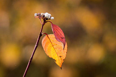 Photograph - Two Leaves Left On The Right by Bill Pevlor