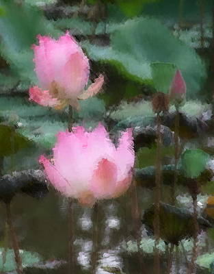 Photograph - Two Lotus by Chua  ChinLeng
