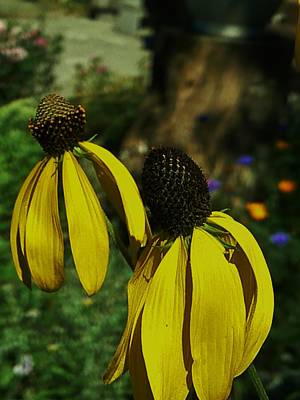 Photograph - Two Of A Kind by Barbara St Jean