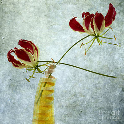 Indoor Photograph - Two Gloriosa Lily. by Bernard Jaubert