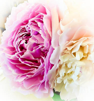 Art Print featuring the photograph Two Peonies by Ronda Broatch