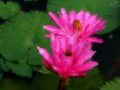 Photograph - Two Pink Water Lily by Chua  ChinLeng