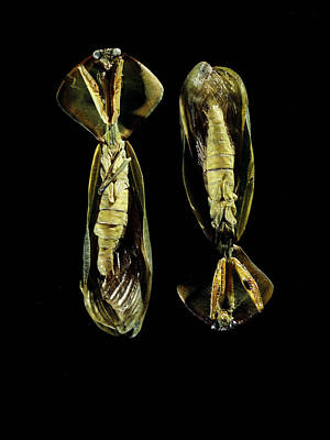 Mantidae Photograph - Two Praying Mantises by Volker Steger