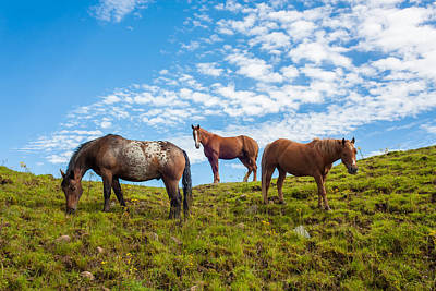 Red Dun Horse Photograph - Two Quarters And An Appaloosa by Semmick Photo
