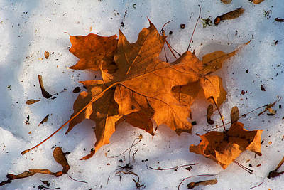 Photograph - Two Seasons by Michael Friedman