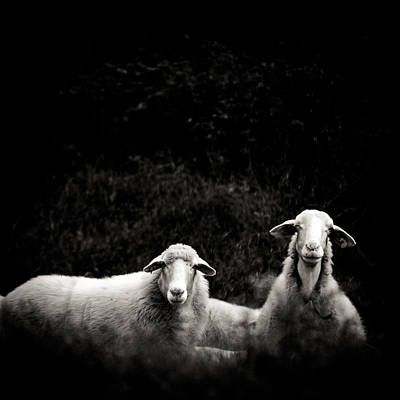 Sheep Portrait Photograph - Two Sheep Looking At You by Raffaella Castagnoli