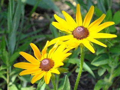 Photograph - Two Susans by Peggy King