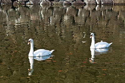 Two Swan Floating On A Pond  Art Print by U Schade