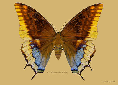 Digital Art - Two Tailed Pasha Butterfly by Walter Colvin