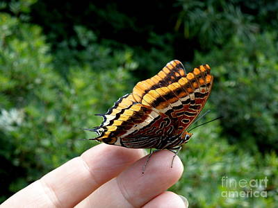 Art Print featuring the photograph Two Tailed Pasha by Lainie Wrightson