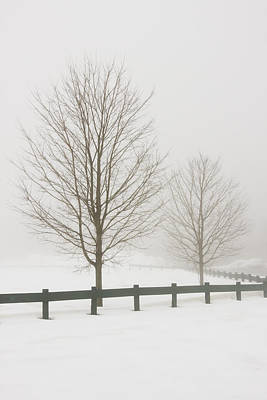 Photograph - Two Trees And Fence In Winter Fog by Keith Webber Jr