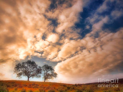 Photograph - Two Trees In The Morning by Tara Turner