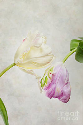 Violet Bloom Photograph - Two Tulips by Nailia Schwarz
