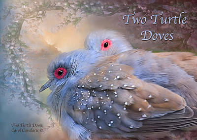Mixed Media - Two Turtle Doves Card by Carol Cavalaris