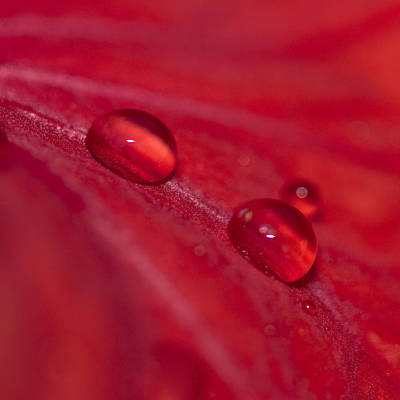 Photograph - Two Waterdrops by Zoe Ferrie
