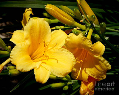Photograph - Two Yellow Day Lilies by Kristen Fox