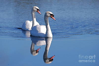Photograph - Twogether 1 by Doug Thwaites