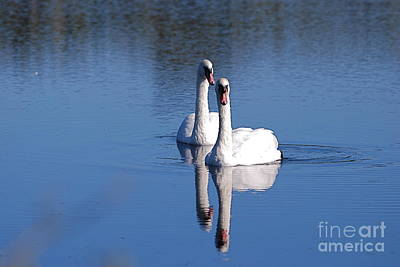 Photograph - Twogether 2 by Doug Thwaites
