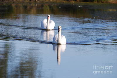 Photograph - Twogether 4 by Doug Thwaites