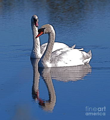 Photograph - Twogether Again by Doug Thwaites