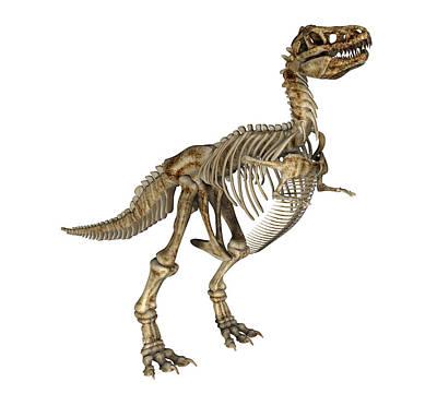 Fossil Reconstruction Photograph - Tyrannosaurus Rex by Friedrich Saurer