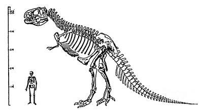 Serration Photograph - Tyrannosaurus Rex by Science Source