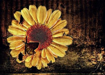 Photograph - Uban Flowers Daisy by Julie Williams