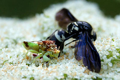 Photograph - Ugly Bug Feast 2 by Bill Pevlor
