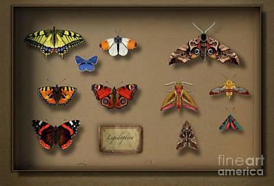 Fluttering Drawing - Uk Butterflies Uk Moths - British Butterflies British Moths - European Butterflies  European Moths by Urft Valley Art