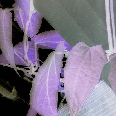 Color Contrast Wall Art - Photograph - Ultraviolet by Ann Miles