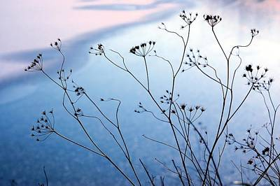 Umbelliferae Silhouettes In Front Of Frozen Lake Art Print by Photo Marylise Doctrinal