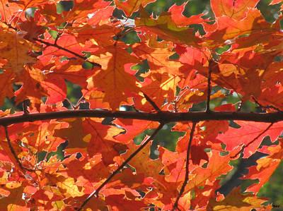 Photograph - Under Autumn Leaves by Debra     Vatalaro