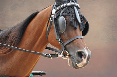 Harness Racing Photograph - Under Harness by Jan Amiss Photography