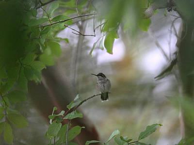 Polaroid Camera - Under the Canopy by Travis Truelove
