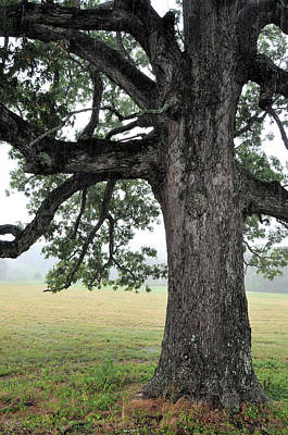 Photograph - Under The Old Oak Tree by Jan Amiss Photography