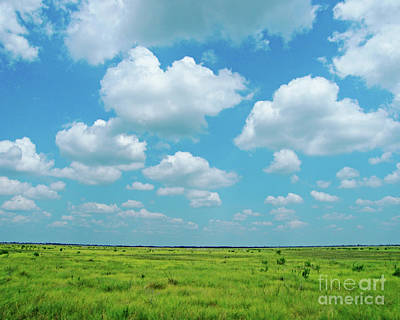 Photograph - Under The Texas Sky by Lizi Beard-Ward