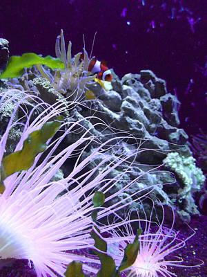 Clown Fish Photograph - Undersea World by Robin Hewitt