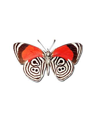 Underside Of The Meadow Wanderers Butterfly Art Print by MajchrzakMorel