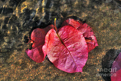 Photograph - Underwater - Bougainvillea Petals by Kaye Menner