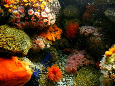 Photograph - Underwater Colors by Cindy Wright